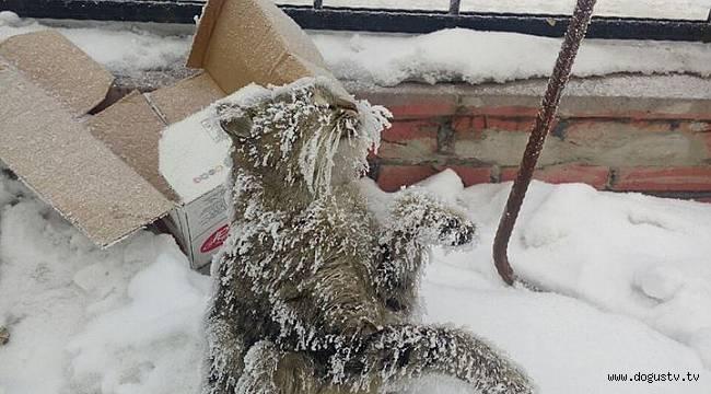 """""""Onlar Üşümez"""" Diyen İnsanlar Yüzünden Donarak Melek Olan Sokak Kedisi"""
