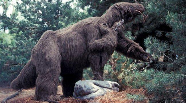 3,5 milyon yaşında dev tembel hayvan bulundu!