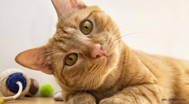 Kediler depresyonda olan sahibini ısırıyor
