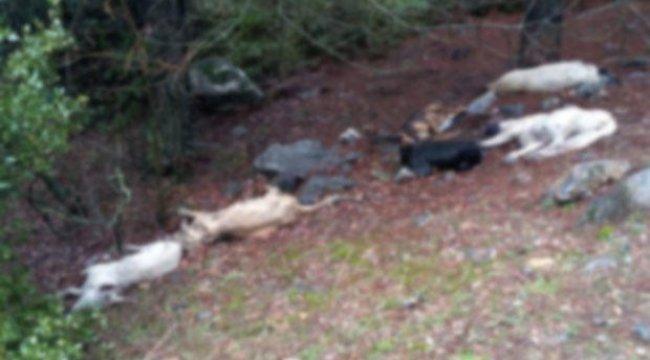 Gaziantep'te 6 köpek zehirlenerek öldürüldü