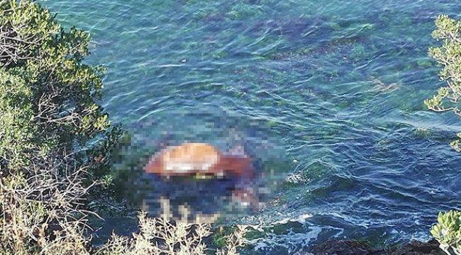 Büyükada sahilinde ölü at şoku