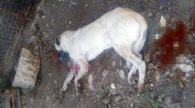 Havlamasına kızdığı köpeği vurdu