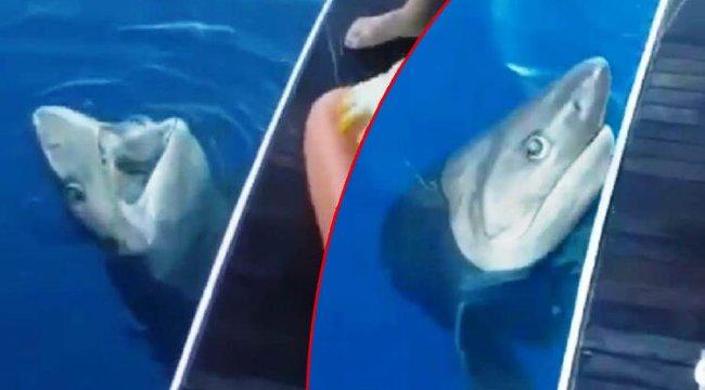 Antalya'da oltaya takılan 3 metrelik köpek balığı turistleri şoke etti