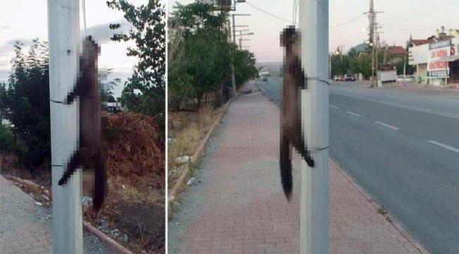 Konya'da dehşete düşüren görüntü! Yön levhasına astılar...