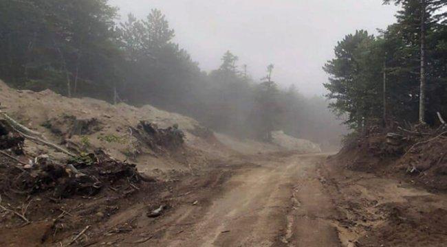 Uludağ'da 1500'e yakın ağaç kesildi! Doğaseverlerden tepki