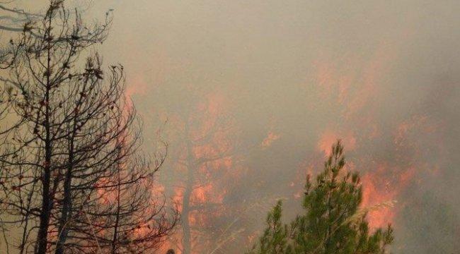 Bir günde 15 orman yangını daha!