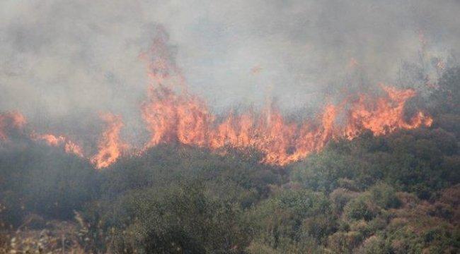 Son dakika… İzmir'de 2 ayrı noktada orman yangını