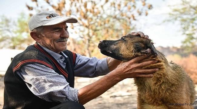 Adana Büyükşehir Belediyesi  veterinerleri Minnoş'u iyileştirdi